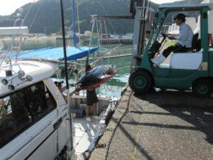 すさみ港の水産業者さんによる積み込みの手伝い